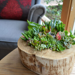 succulent log table centrepiece